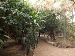 idea Dschungelparadies