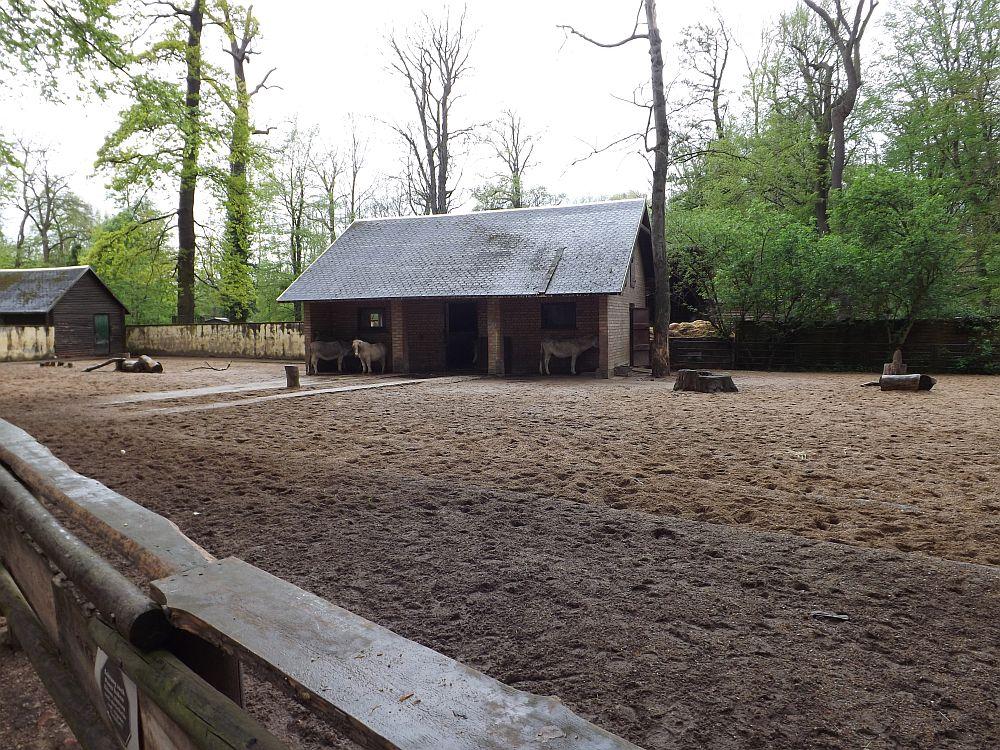 Ponyanlage (Tierpark Köthen)