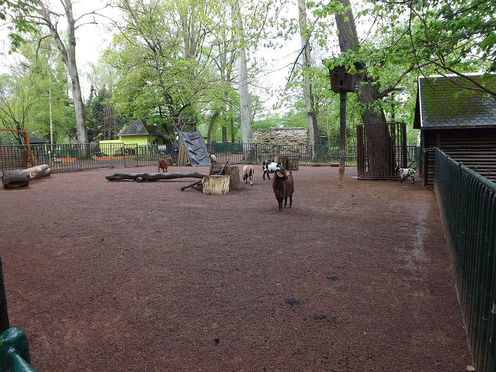 Streichelzoo (Tierpark Köthen)