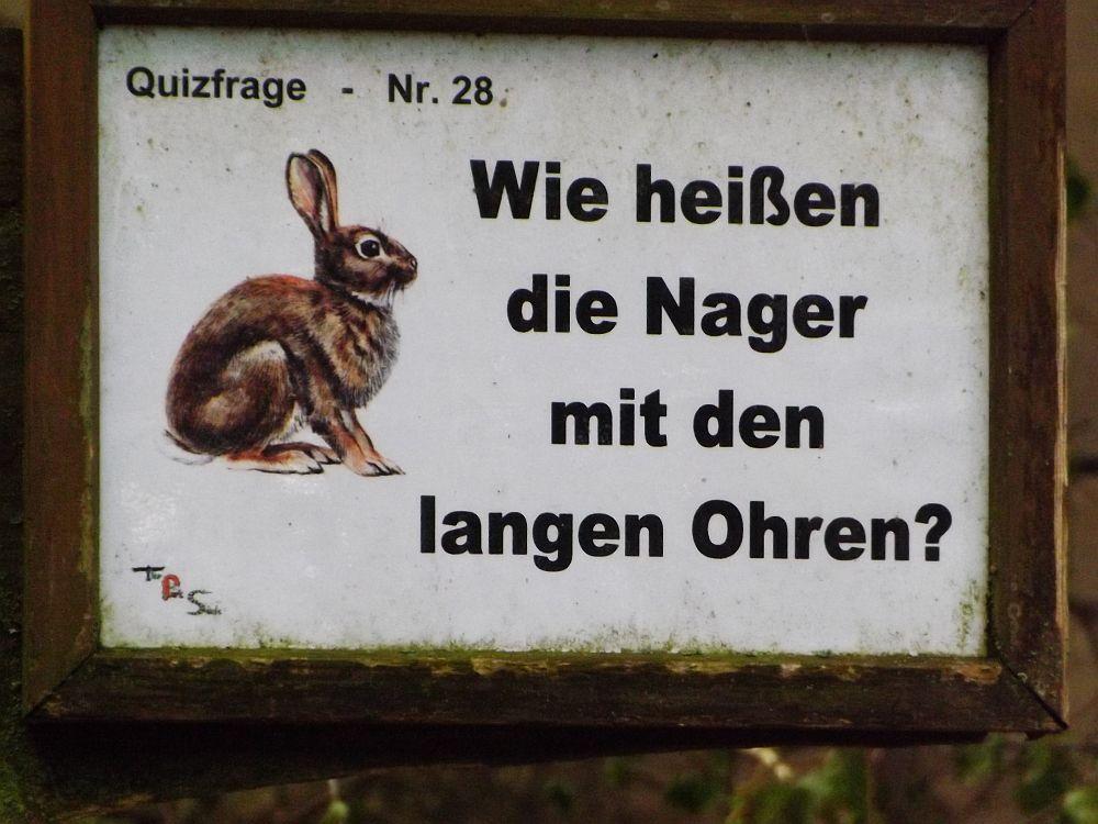 Quizfrage im Tierpark Hexentanzplatz