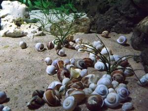 Baustelle: Tanganjikaaquarium (Tierpark Hellabrunn)