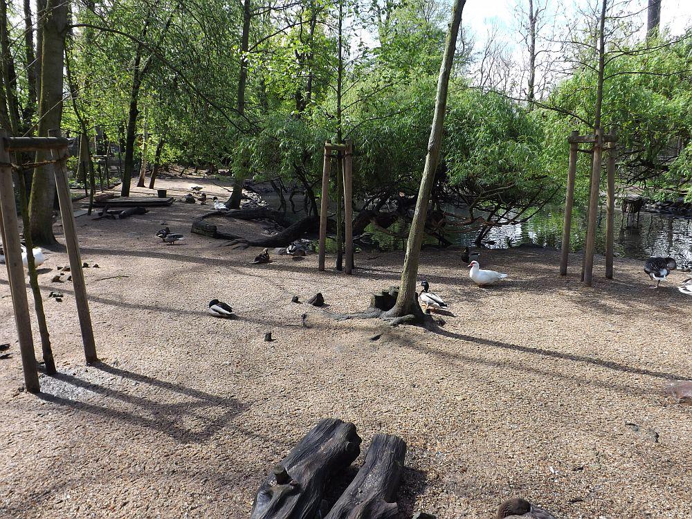Teichanlage (Tierpark Köthen)