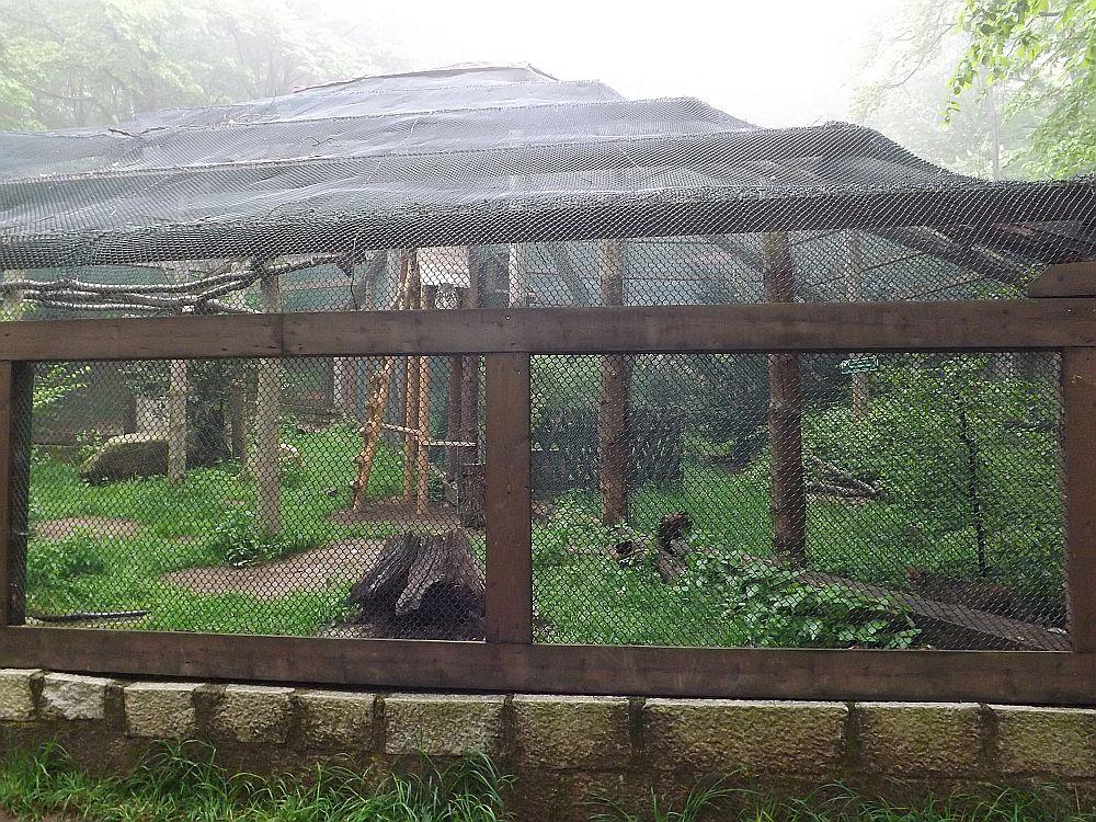 Wildkatzen und Uhus (Wildpark Christianental)