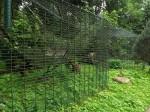 Affengehege (Tierpark Zittau)