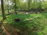 Braunbäranlage (Tierpark Hexentanzplatz)