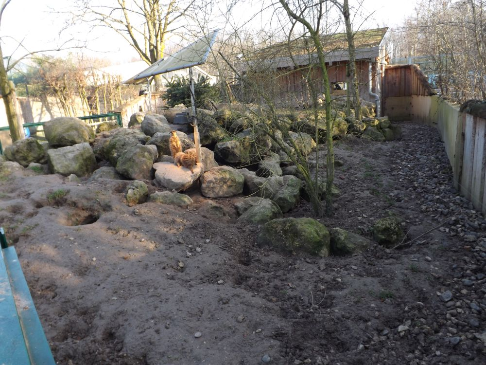 Erdmännchenanlage (Tiergarten Worms)