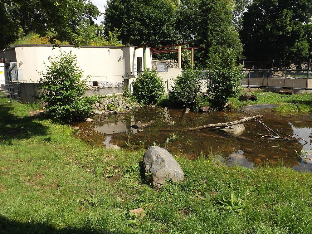 Fischotteranlage (Zoo Hoyerswerda)