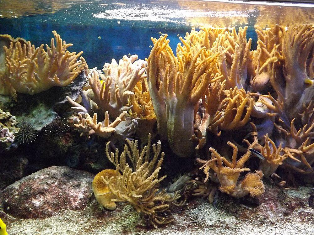 Korallenriff (Aquarium Thüringer Zoopark)