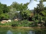 Löwen vor Dschungelzelt (Tierpark Hellabrunn)