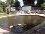 Pinguinanlage (Zoo Hoyerswerda)