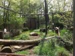 Polaris (Tierpark Hirschfeld)