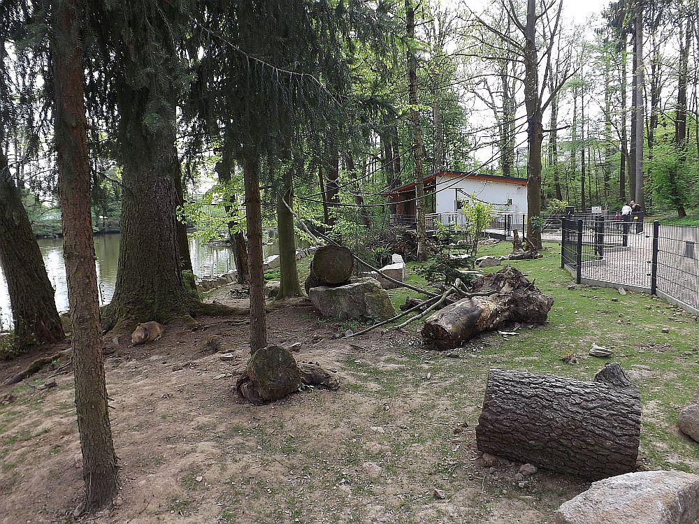 Rüsselsheim (Tierpark Hirschfeld)