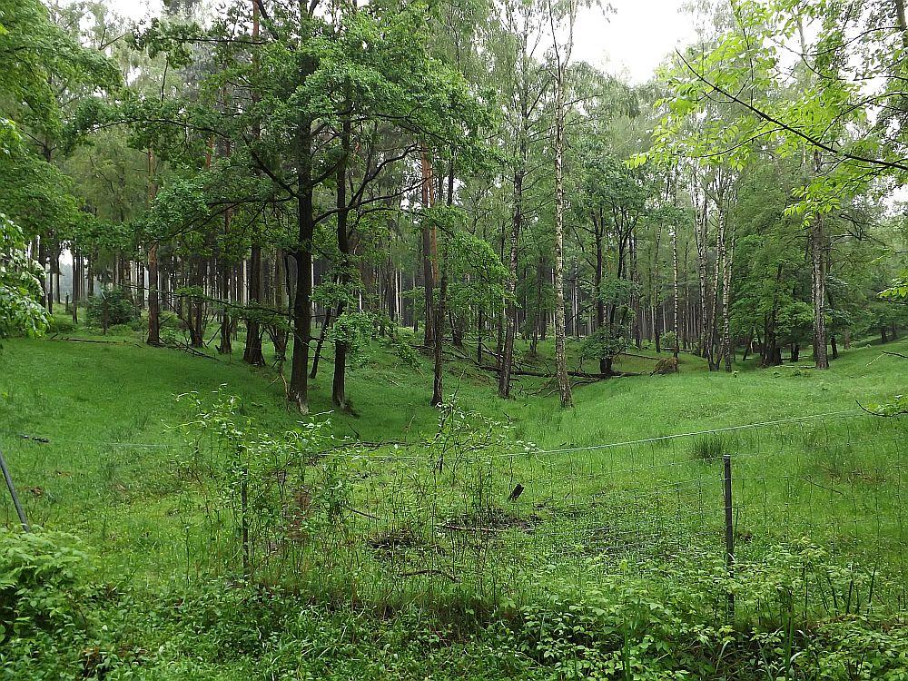 Rothirschgehege (Wildgatter Oberrabenstein)
