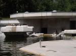 Seelöwenanlage (Tierpark Hellabrunn)