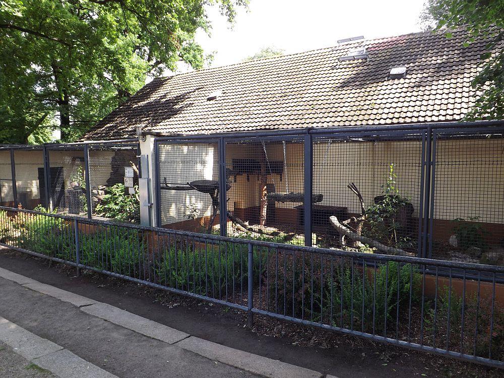 Servalgehege (Zoo Hoyerswerda)