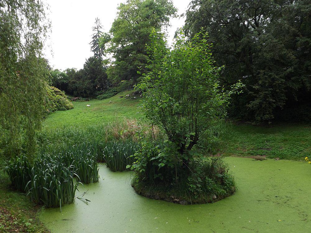 Storchenteich (Naturschutz-Tierpark Görlitz)