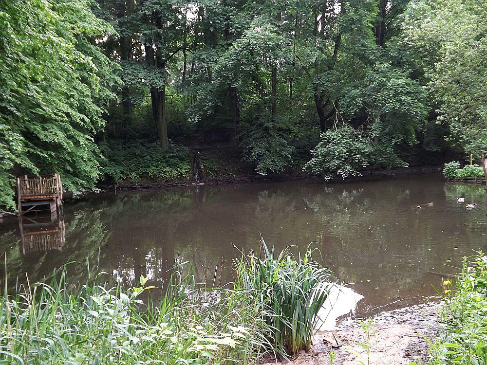 Teich (Naturschutz-Tierpark Görlitz)