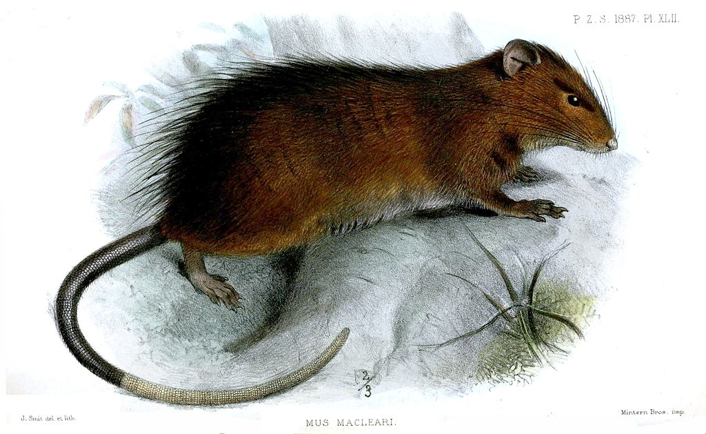 Maclear-Ratte (Joseph Smit)