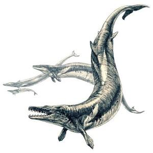 Basilosaurus (Pavel Riha)