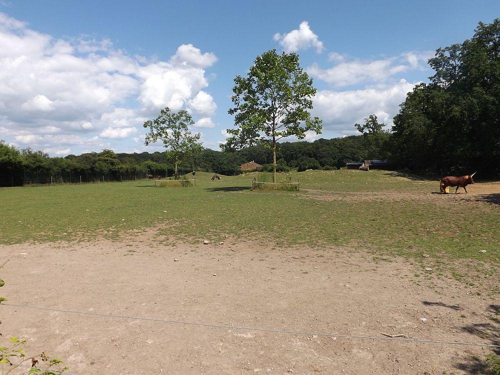 Afrikaanlage (Tierpark Essehof)