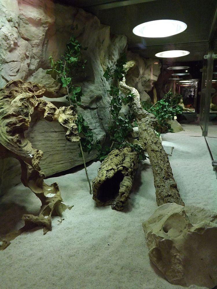 Terrarium der Fetten Sandratten (Tierpark Hellabrunn)