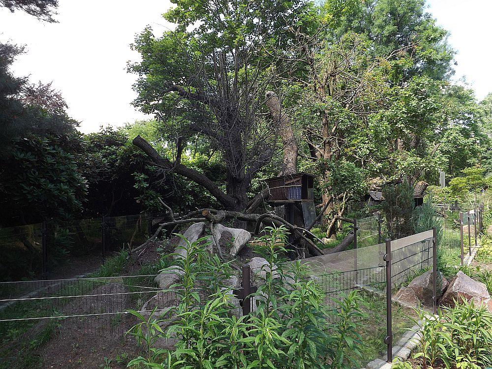 Baumstachleranlage (Zoo Dresden)