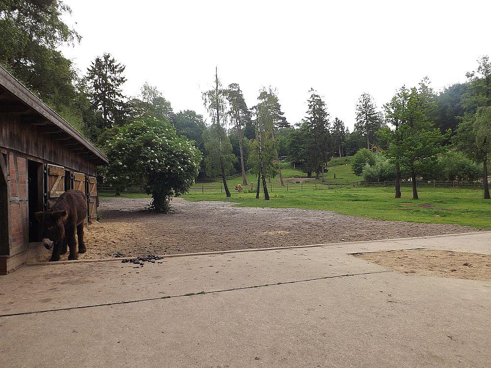 Eselanlage (Wildpark Lüneburger Heide)