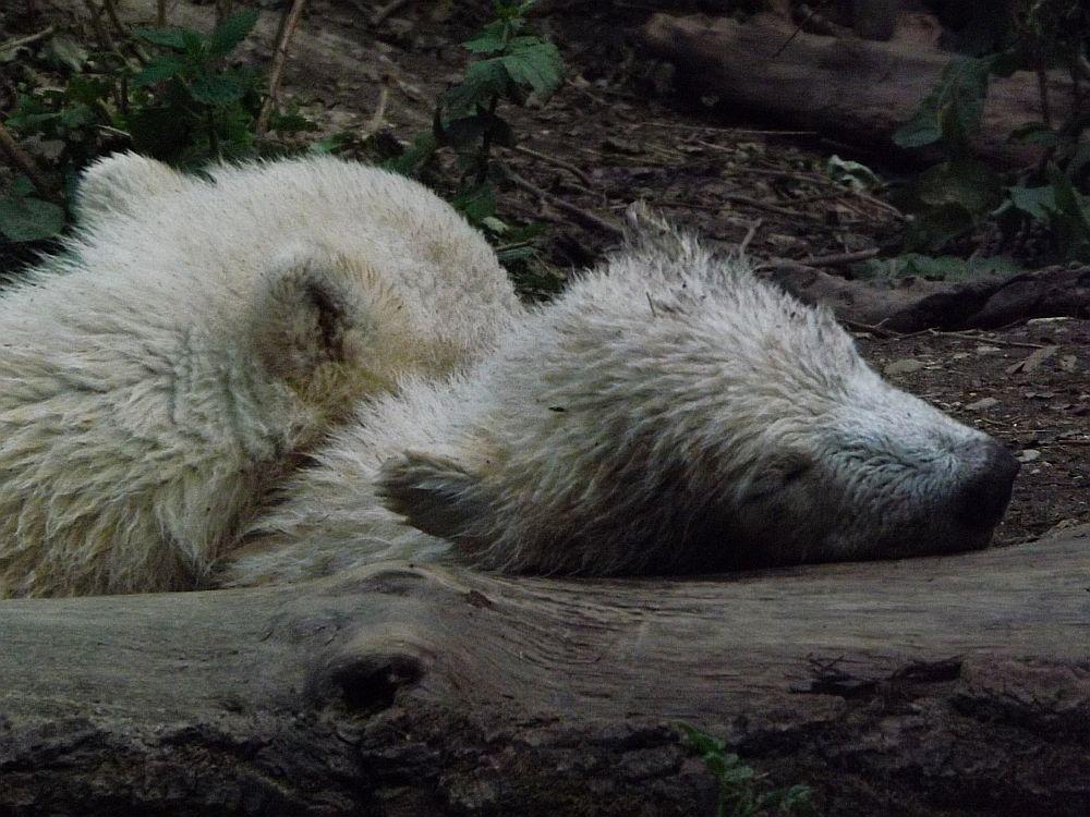 Nobby und Nele (Tierpark Hellabrunn)