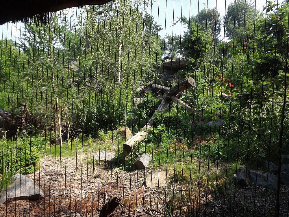 Leopardental (Zoo Leipzig)