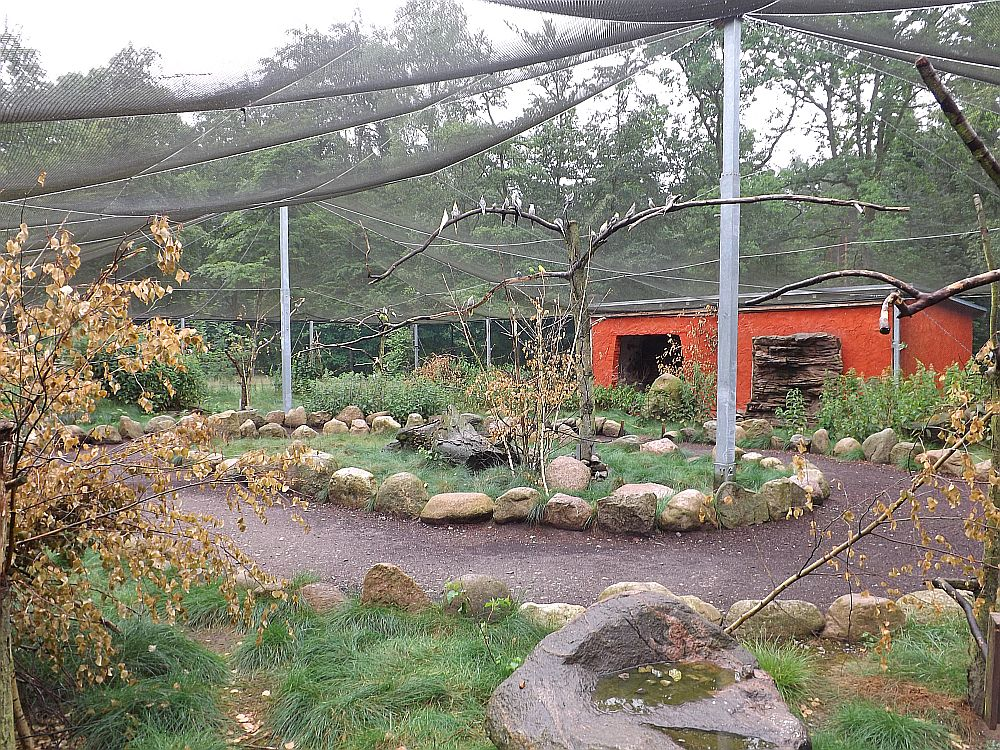 Begehbare Sittichvoliere (Tierpark Perleberg)