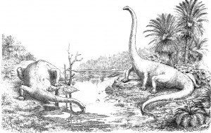 Diplodocus (Oliver Hay)