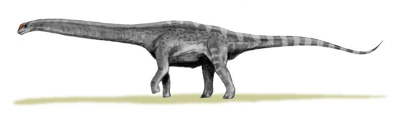 Argentinosaurus huinculensis (© N. Tamura)