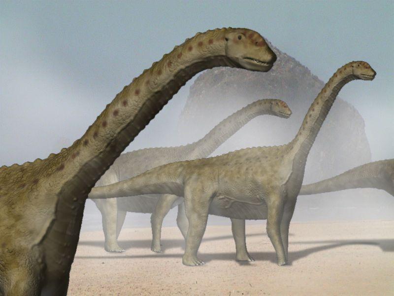 Camarasaurus supremus (© N. Tamura)