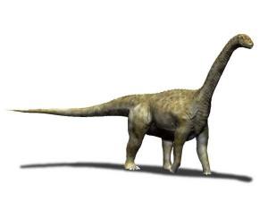 Camarasaurus lentus (© N. Tamura)