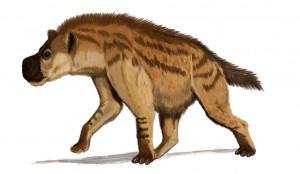 Dinocrocuta gigantea (Dmitry Bogdanov)