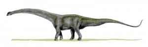 Futalognkosaurus dukei (© N. Tamura)