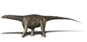Saltasaurus loricatus (© N. Tamura)