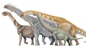 Camarasaurus, Brachiosaurus, Giraffatitan, Euhelopus (Dmitry Bogdanov)