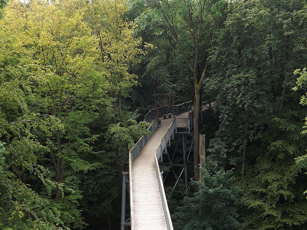 Baumkronenpfad Bad Langensalza