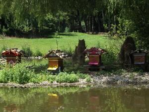 Bienen am Großen Teich (Wildpark Poing)