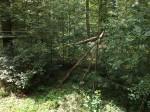 Luchsland (Wildpark An den Eichen)