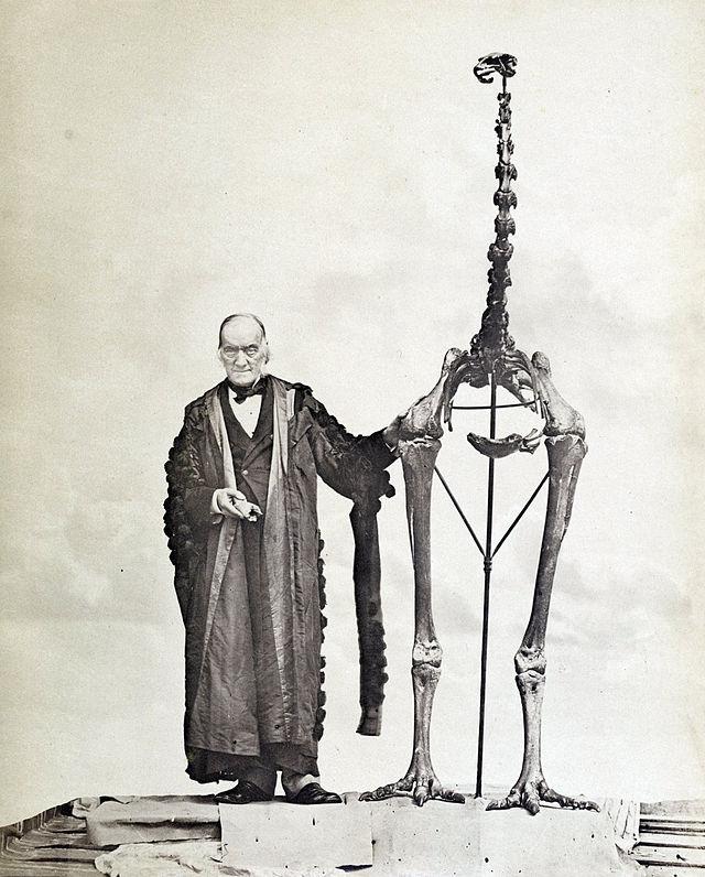 Richard Owen neben dem Skelett des Moas Dinornis novaezealandiae. In der rechten Hand hält er einen der ursprünglich von John Rule nach London gebrachten Knochen.