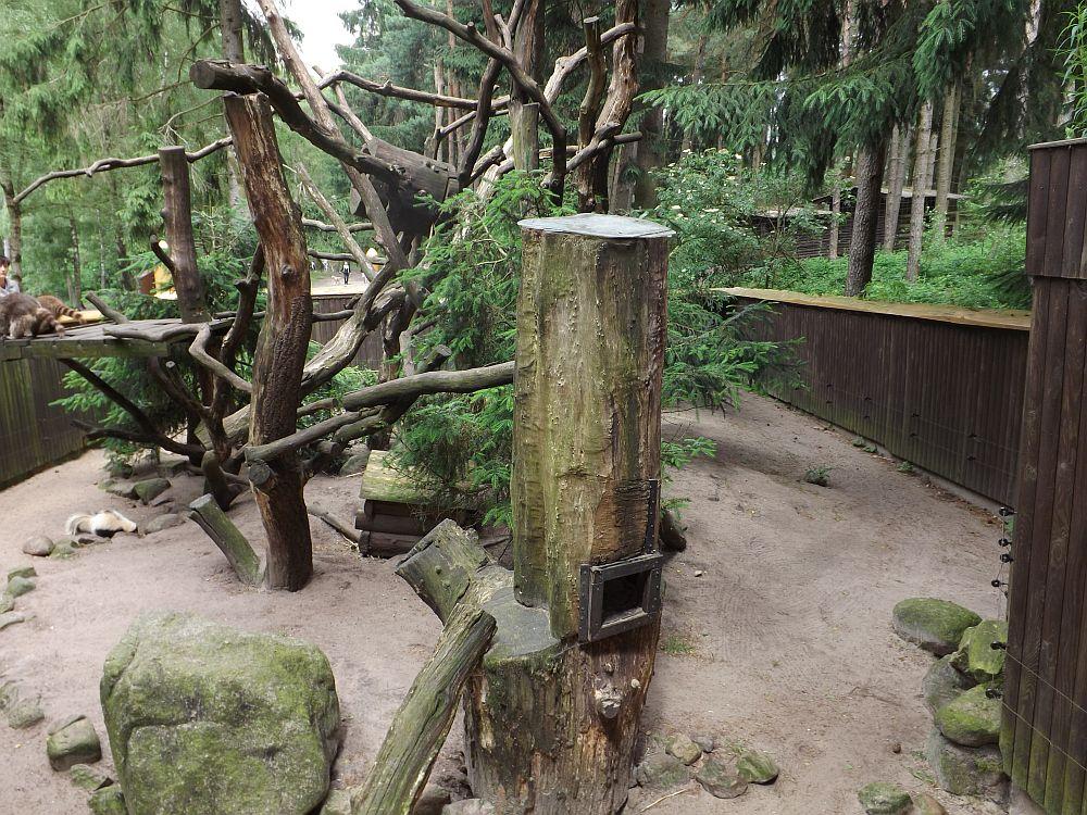 Waschbäranlage (Wildpark Lüneburger Heide)