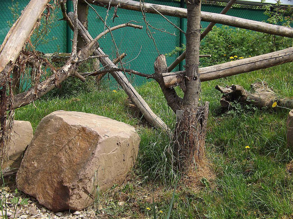 Wildkatzendorf Hütscheroda im Nationalpark Hainich