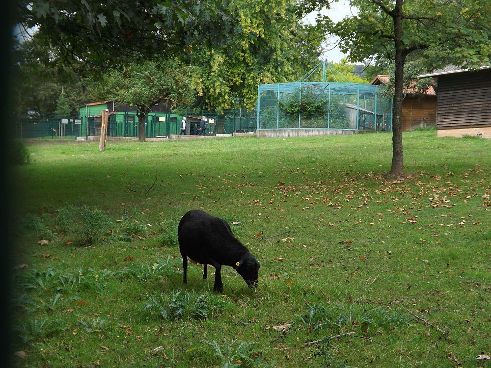 Tierpark am Blättelbornweiher