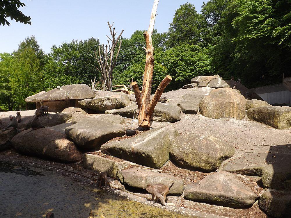 Pavianfelsen (Tierpark Hellabrunn)