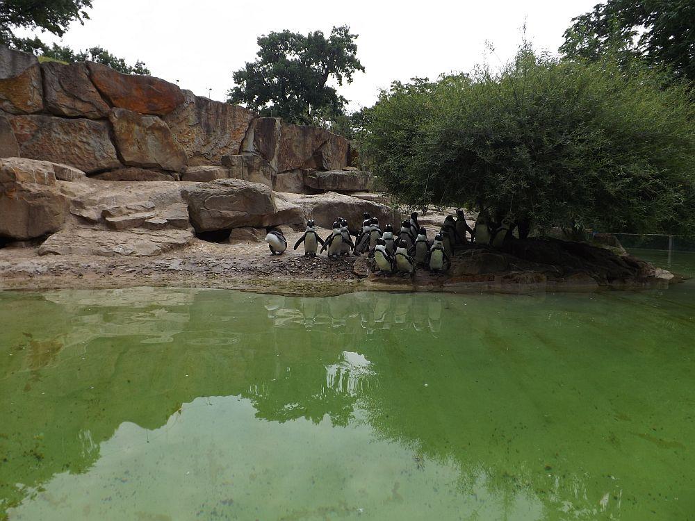 Pinguinanlage (Zoo Berlin)
