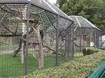Außenanlage der Schimpansen (Zoo Saarbrücken)