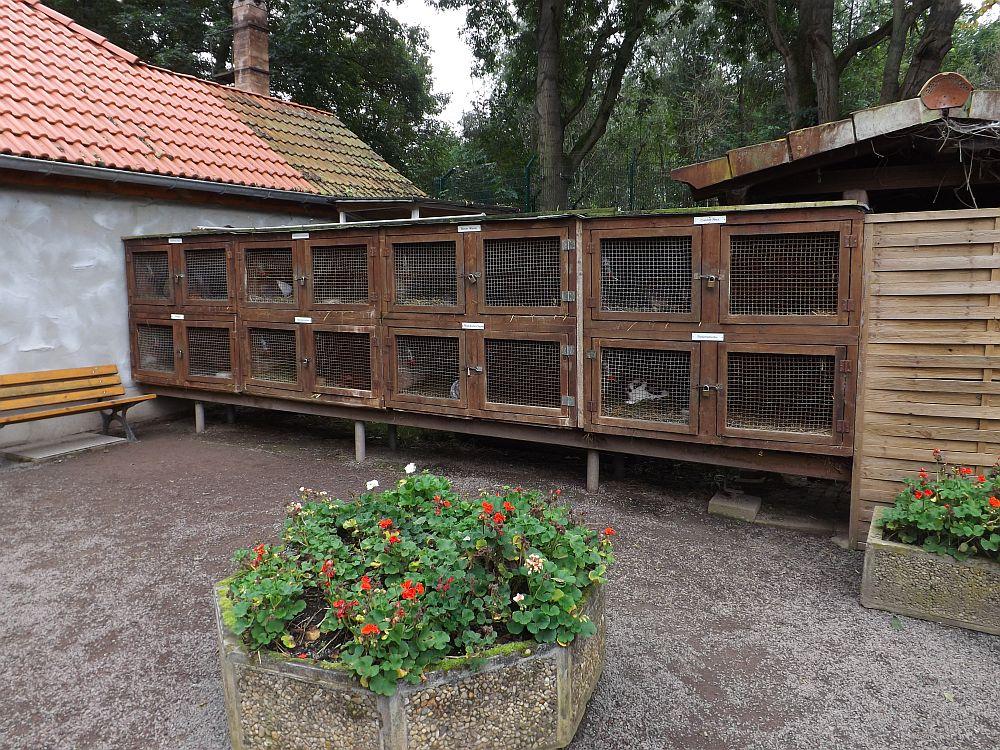 Kaninchenhaltung (Tierpark Gotha)