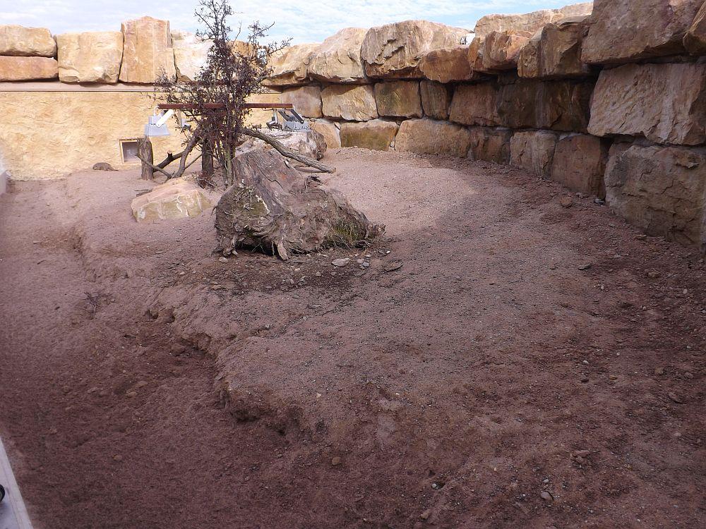 Neue Zebramangustenanlage (Thüringer Zoopark)